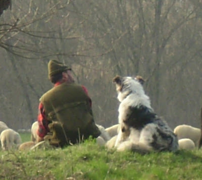 Un vero pastore che custodisce il suo gregge