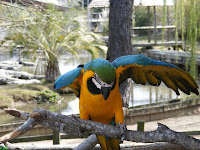 Gold and Blue Macaw may chat with you