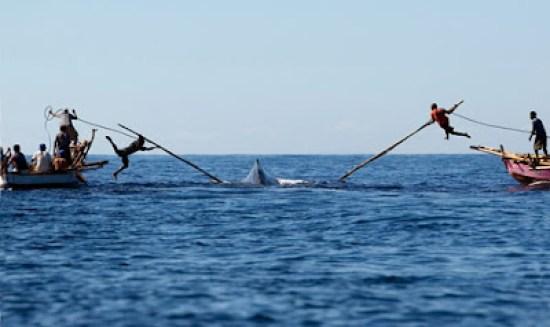 Resultado de imagen para persiguiendo ballenas para cazarlas