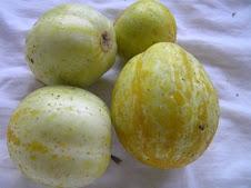 Lemon Cucumbers