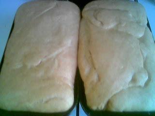 Cinnamon Bread Proofing