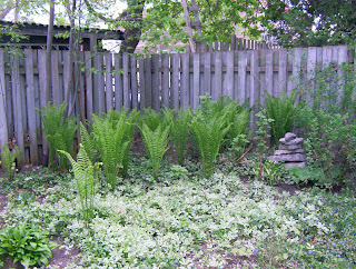 Ferns in the South West corner