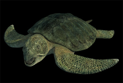 Ancient Sea Monsters Prehistoric Sea Creatures Photos Natural World Site