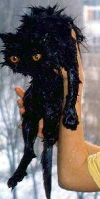 wet cats