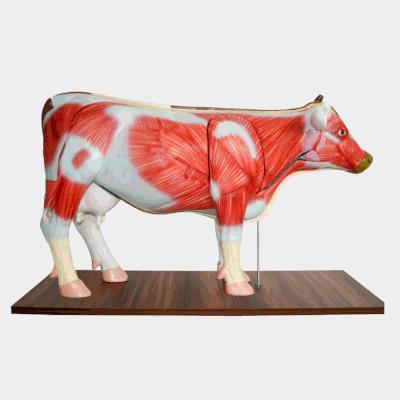 Modelo de Vaca