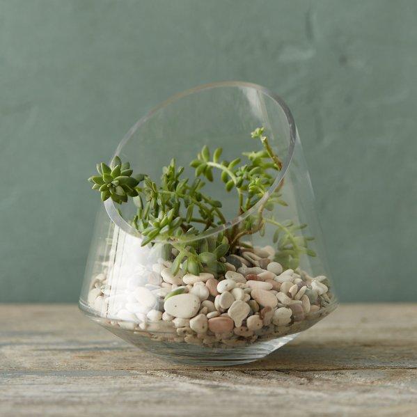 Unique Glass Terrariums In 2017 - Decorative