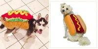 29 Best Dog Costumes for Halloween 2018