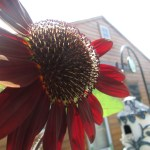 housing, garden, sunflower