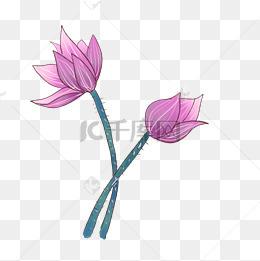 花骨朵圖片-花骨朵素材圖片-花骨朵素材圖片免費下載-千庫網png