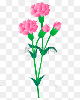 康乃馨矢量花圖片-康乃馨矢量花素材圖片-康乃馨矢量花素材圖片免費下載-千庫網png