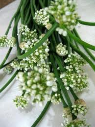Sayuran Yang Berasal Dari Bunga : sayuran, berasal, bunga, Bumbu, Masak, (rempah,, Daun,bunga,buah), Banda