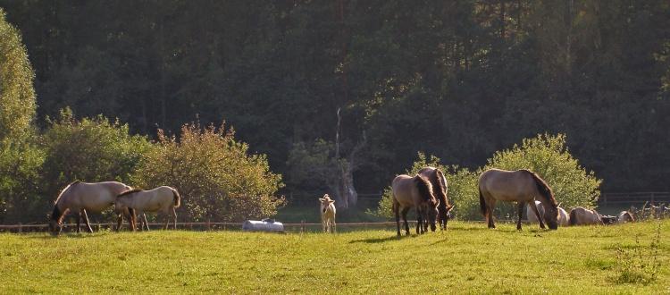 Wycieczka na Roztocze Lubelskie. Zwiedzanie Roztoczańskiego Parku Narodowego i Szumy na Tanwi. Stawy Echo, Konik Polski.