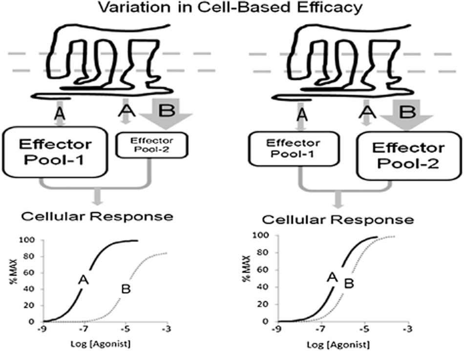 New concepts in pharmacological efficacy at 7TM receptors