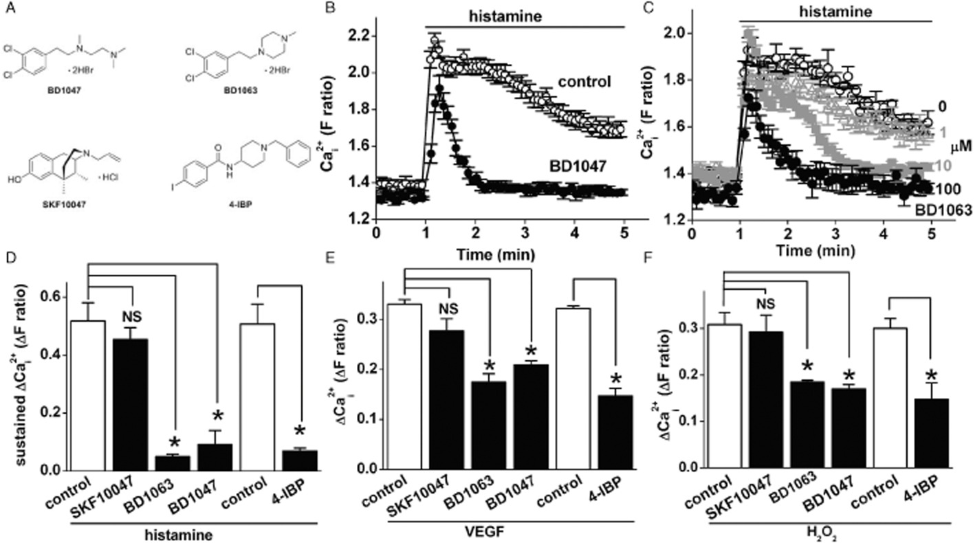 Inhibition of endothelial cell Ca2+ entry and transient