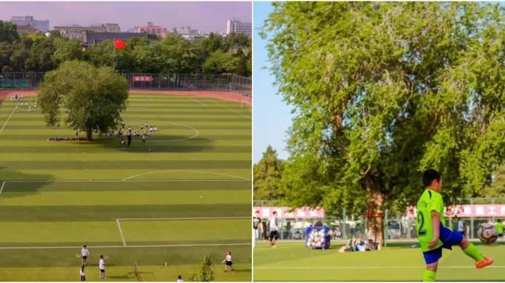 【中国】サッカー場のど真ん中に国宝!?北京で一番古い大木は今!?