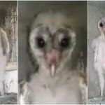 【衝撃動画】ガチで鳥人間は存在した!?直立する鳥型UMAインドで拡散