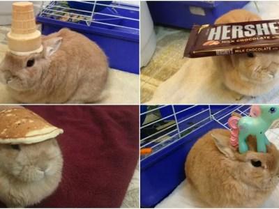 ウサギの頭には何を乗せても可愛い説