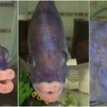 セクシーな唇を持つ魚