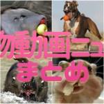 動物動画ニュースまとめ