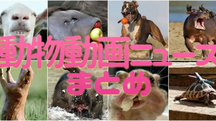 【必見】おもしろ可愛い動物ニュース動画まとめ!海外で話題のアニマルムービー