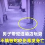 【中国】毒蛇で脅迫して女性に肉体関係を迫った男が逆に噛まれて死亡