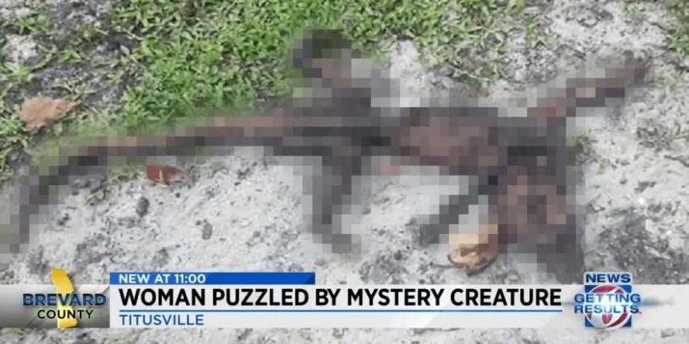 干からびた未確認生物の遺体を発見