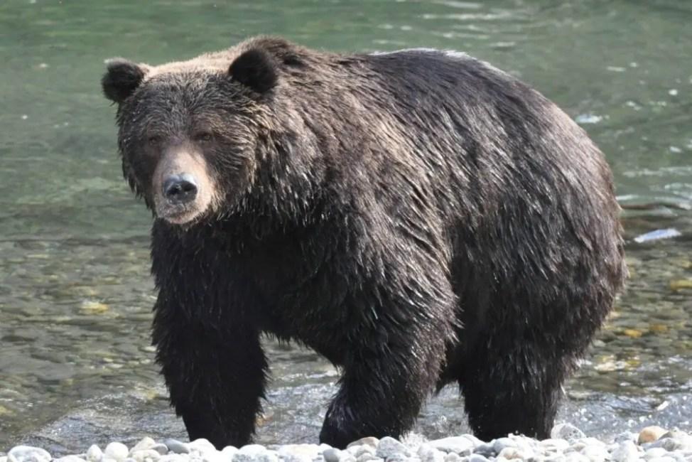 野生の熊に1ヶ月監禁された男