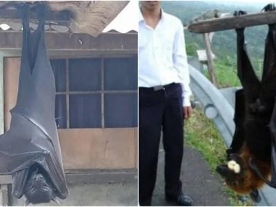 人間サイズの巨大コウモリはフィリピンに実在した