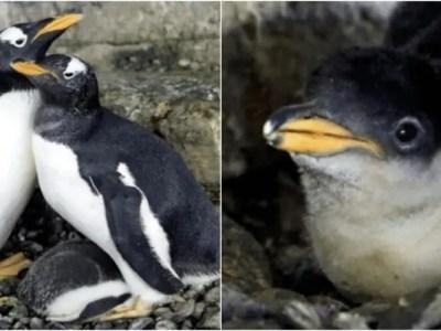 レズビアンのペンギンカップルに赤ちゃん誕生