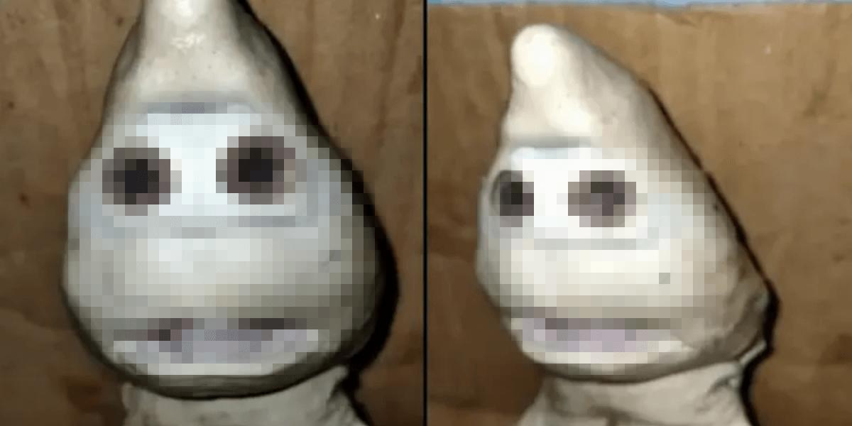 奇形の人面鮫