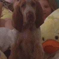 Ms. Puppy Eikelberger