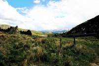 Meadow, north