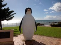 Big Penguin is watching...