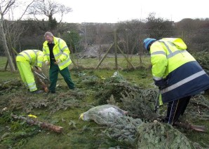 Springfield Community Garden using old Christmas trees