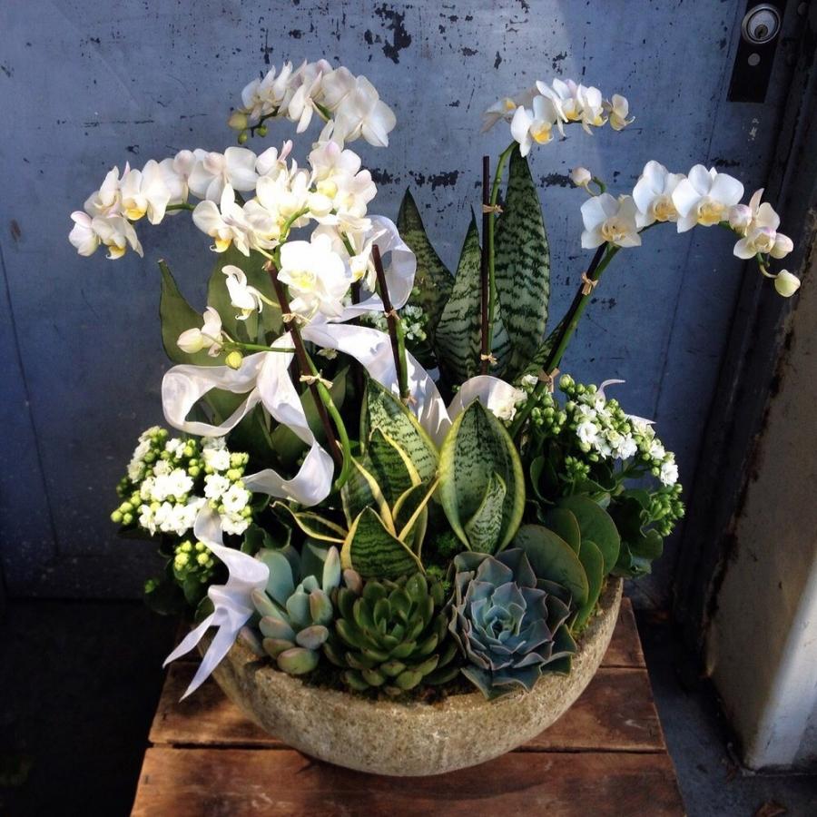 Succulent Gardens  Pasadena Florist  Brad Larsen Florals