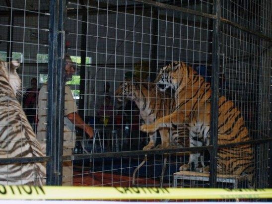 tigers_5-21-06