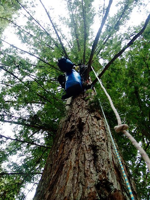 tree-gear_11-7-07