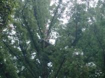 treehouse_11-7-07