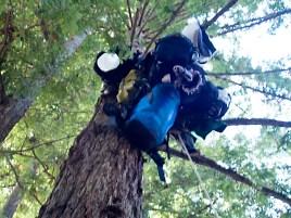 treesit-supplies_11-7-07