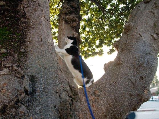 cat_1-23-08