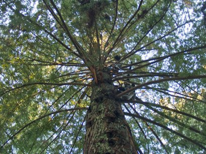 sitters-tree4_1-12-08
