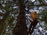 tree-sitter_1-6-08