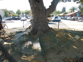 lonely-tree_9-17-08