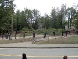 cut-trees-cops_12-13-08