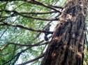 squirrel_12-13-08