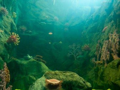 Sea Floor Tank