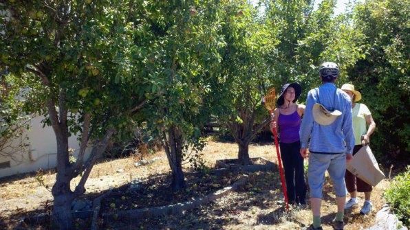 santa-cruz-fruit-tree-project_13_8-26-12