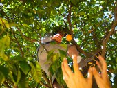 Steve Schnaar Tosses an Orange