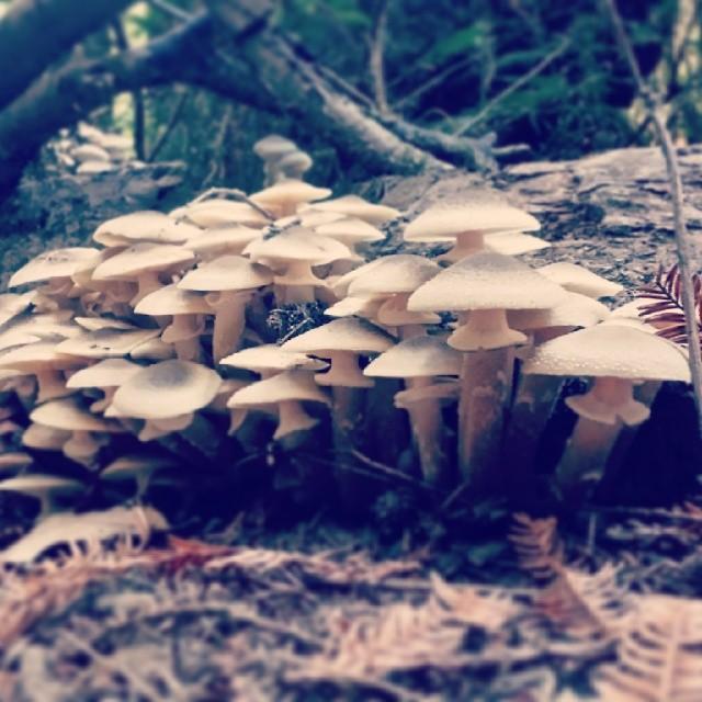 Cluster of mushrooms at Fall Creek