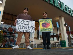 Respect The Farmworkers: Boycott Driscoll's
